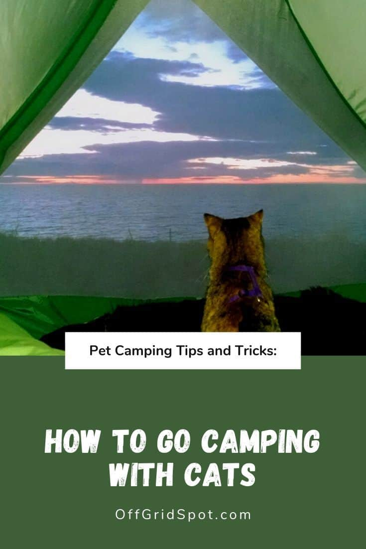 RV Camping with Cats